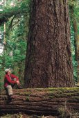 Cathedral Grove, Vancouver Island - (Photo Credit: ©Tourism British Columbia)